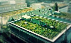 Curitiba quer tornar obrigatória a implantação de telhados verdes em edifícios