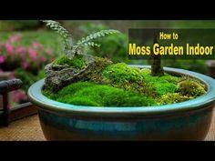 How to Make a Moss Pot: Emmymade - YouTube
