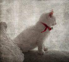 Sleepy Kitten by Window by Kim-maree Clark Sleepy Kitten, Window, Japanese, Fish, Artists, Cats, Animals, Gatos, Animales