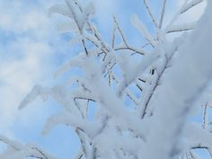 #birch #snow The Real World, Birch, The Dreamers, Storytelling, Clouds, Snow, Culture, Travel, Outdoor