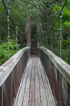 Some people think there are no hills in Florida, but the natural landscape at Ravine Gardens State Park in Palatka shows that's not true. Actually, this park is full of delightful surprises.