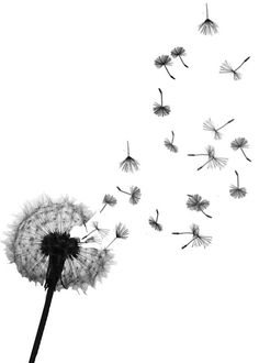 Images Of Dandelion  Seeds Temporary Tattoo On Wanelo Wallpaper