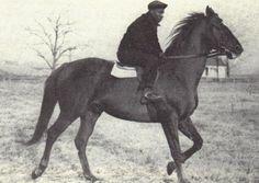 A 22 year old Man O' War taking his daily jog at Faraway Farm.