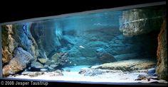 2008 AGA Aquascaping Contest - Entry #53