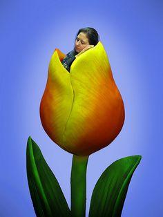 Anne Geddes Week, Day Three -Molly takes a Tulip nap.