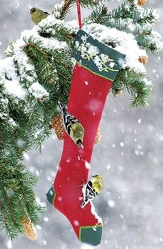 . Snow boots...TG