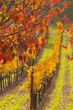 You won't find anywhere more romantic than California's Wine Country.