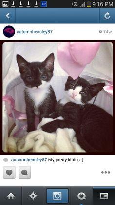 Kitty cats of mine love them