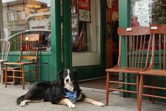 Stay With Choice Hotels And Experience Canada S Best Dog Friendly Cities