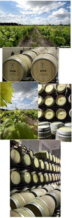 quinta do seixo, portugal, vinho branco, vinho tinto, vinicola, vinho, frança, borgonha, natureza, gastronomia, viagens, parreira, uva, passeio, romance, paisagem, design, arquitetura