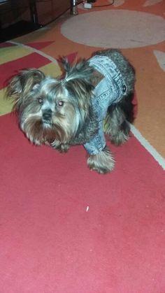 A Roupa Do Cão Denim Gola de Pele de Inverno Casaco Grosso Quente Para Animais de Estimação Do Cão roupas Jeans Casaco para Pequenos Animais De Estimação Gato e Cão Bichon Chihuahua Yorki Loja Online | aliexpress móvel