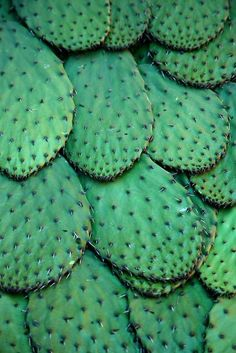 TEXTURE: this picture shows the surface of a cactus. It has a sleek, smooth texture with spikes on top. Patterns In Nature, Textures Patterns, Green Colors, Colours, In Natura, Cactus Y Suculentas, Cacti And Succulents, Belle Photo, Shades Of Green