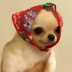 sarah green: illustrator living in SF - fursonar: look at this little babooshka Cute Animal Memes, Animal Jokes, Cute Funny Animals, Funny Animal Pictures, Funny Dogs, Funny Dog Memes, Cat Memes, Cute Puppies, Cute Dogs