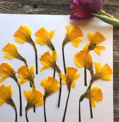 Excited to share this item from my #etsy shop: 10 Pressed Daffodils • Dried Yellow Real Flowers • Free Shipping • #eastercrafts #resincrafts #yellowflowers #realflowers #pressedflowers #etsycrafts