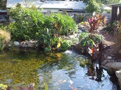 Pondtastic Water Gardens-Orlando Pond Installation and Design