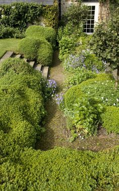 Hedges lining a garden path