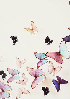 蝶々。てふてふ。