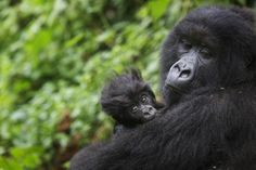 (PHOTO: Getty)  Ten countries that are virtually off-limits to tourists:  3. Democratic Republic of Congo  Although it's not a dangerous as it used to be, getting past the red tape involved in visiting is almost as difficult as spotting one of the elusive mountain gorillas that live there.  You also often face the prospect of paying 'unofficial fees'.