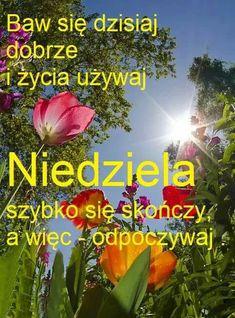 Weekend Humor, Plants, Mottos, Disney, Polish, Good Morning Funny, Plant, Disney Art, Planets