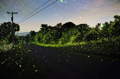 Captivating Pictures of Fireflies in the U.S.1