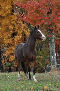 Bay Horse in Fall  Photo Print 8x10 by kandrewsphotography on Etsy, $25.00