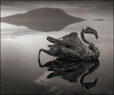"Haunting images of Africa and the world's deadliest lake photographer Nick Brandt's latest book, ""Across The Ravaged Land."""