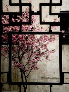 cherry blossom like a picture  silence