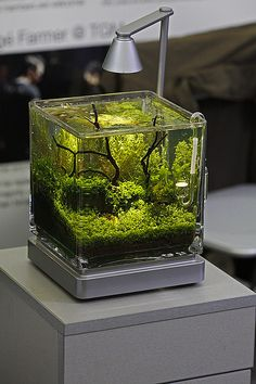 mini planted aquarium.  Very nice cube aquarium.