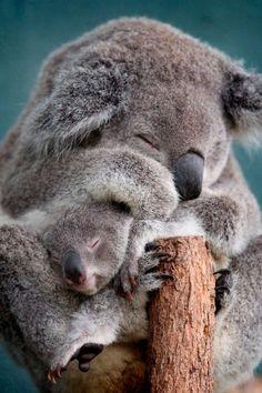 Cute Mother and Baby Animal Pics #babyanimal #babyanimalpics