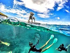 See 31 stunning half underwater GoPro photos. Plus, get 6 tips for shooting your own great half underwater photos with a GoPro and dome port. Gopro Underwater, Underwater Photos, Gopro Photography, Underwater Photography, Better Photography, Digital Photography, Street Photography, Landscape Photography, Portrait Photography
