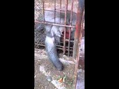La scimmia intelligente
