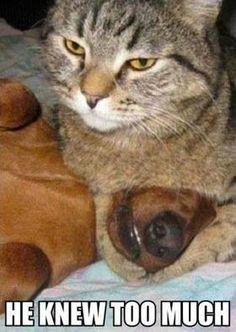 Meow ....