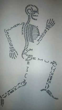 All Things Beautiful: Human Biology: Bones and the Skeletal System - Science Medical Students, Medical School, Nursing Students, Medical Science, Student Nurse, Student Memes, Radiology Student, Student Login, Medical Coding