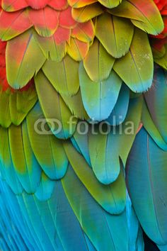 macaw wall mural