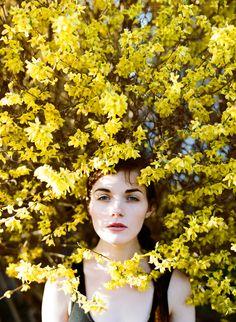 노란 개나리. 봄은 언제?