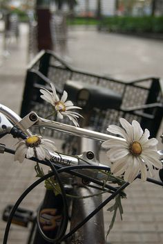 Bicycle with white daisies