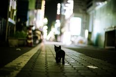 OMG! I just wanna scoop this lil kitty up and protect it from the big, dark night. What are you doing out alone so late?