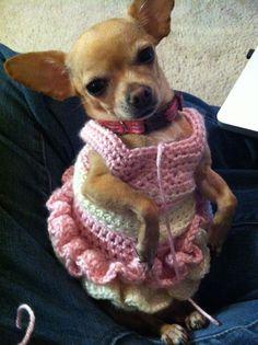 http://1.bp.blogspot.com  dog dress