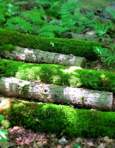 Ferns and Green Mossy Logs