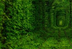 10. Tunnel of Love (Ukraine). This magical place is found in Kleven, Ukraine. It is a 1.8 mile long tunnel of luscious green leaves that looks as if it was taken from a dream or from a movie. This Tunnel of love is actually a passageway of a private train that delivers wood to a local factory three times a day.