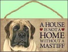 english mastiff pictures - Google Search