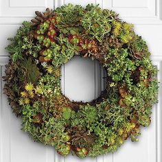 Each one of our living succulent wreaths is carefully made by hand, using an assortment of succulent varieties.  Each plant is artistically placed into our moss-filled wreath frame, for the most pleasing color and texture combination.  Varieties may vary, as they are selected based on the best quality on-hand.  Please note that wreaths are living, and will continue to grow and fill out over time.  The image reflects how the wreath will arrive, with a variety of succulents and some areas of…