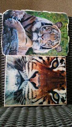 Panter/tijger