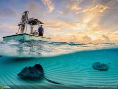 Скаты на отмели у острова Большой Кайман. Автор фото: Thomas Pepper