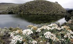 Colombian court bans oil, gas and mining operations in high-altitude ecosystems