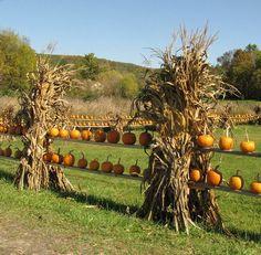 pumpkin fence