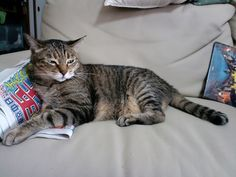 Today's cat on 17th July 2012 by ganchan2, via Flickr