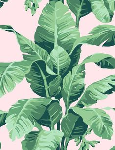 Bringing the outside in, the Pacifico Palm print is sure to transform any room with tropical flair. Hand drawn by our in-house designer, this banana leaf print was originally inspired by the Martinique wallpaper from the Beverly Hills Hotel. Wallpaper Panels, Print Wallpaper, Wallpaper Roll, Wallpaper Patterns, Tree Wallpaper, Wallpaper Wallpapers, Peach Wallpaper, Classic Wallpaper, Tropical Wallpaper