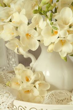 Freesia by Catherine Wood