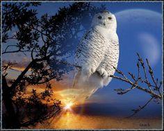 ☾Wir haben Vollmond- we have full moon ☽  Jeder Mensch trägt einen Kontinent unentdeckten Wesens in sich. Wohl dem, der sich zum Kolumbus der eigenen Seele machen kann. –  Salvador de Madariaga y Rojo — hier: Neverland. Salvador, Cute Animals, Owls, Full Moon, Continents, Animales, Savior, Pretty Animals, Cutest Animals